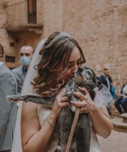 Wedding Dog Sisters